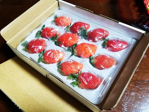 最高糖度19度!! 兵庫県産 高糖度イチゴ 多品種あります。