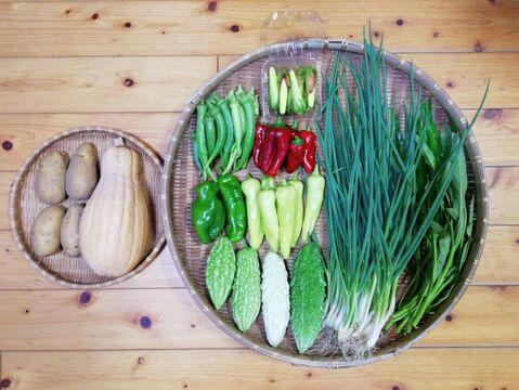 【農薬・化学肥料不使用】【クールで対応】おまかせ野菜セット【6~8種類の野菜】【80サイズ箱】