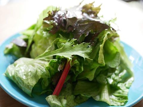 野菜嫌いの子供も大人もパクパク食べられる!オーガニックの旨味たっぷり葉野菜10パックセット【5〜10品目】