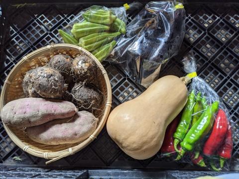 【農薬不使用】四季のとれたて野菜少量セット(約6種)