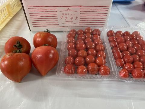 トマトの王様!?プチぷよとルネッサンスのトマトセット