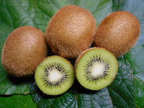 平均糖度15度!! 農薬・化学肥料不使用キウイフルーツ 9玉