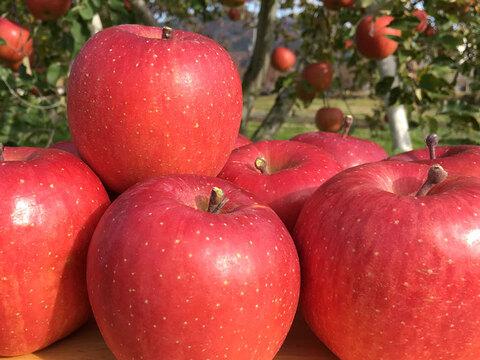 りんご 2020年産 サンふじ 【贈答用約2㎏】約5-8玉 12月出荷