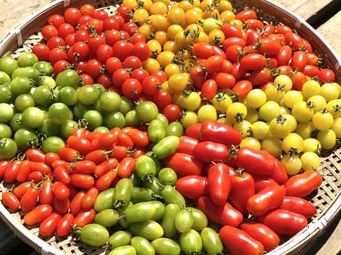 【冷んやり屋】《見た目も可愛い♪》カラフルトマト7種食べ比べセット《各300gx7種 合計2.1kg》