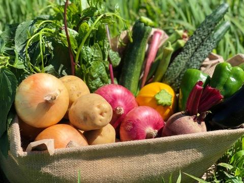 旬彩野菜セット5〜7品目+サラダセット5袋《化学肥料・農薬不使用》