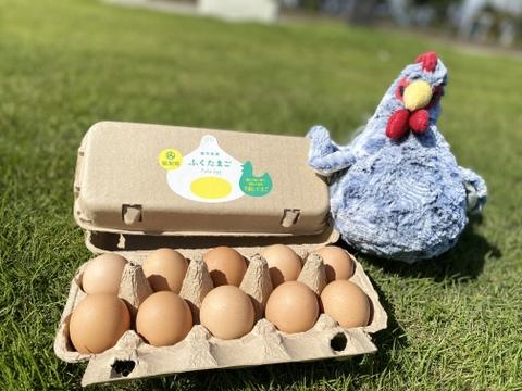 まずは卵かけご飯で!福井県・福地鶏のふくたまご(20個)