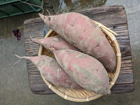 【農薬、化学肥料不使用】さつまいも1.5kg & 里芋1.5kg