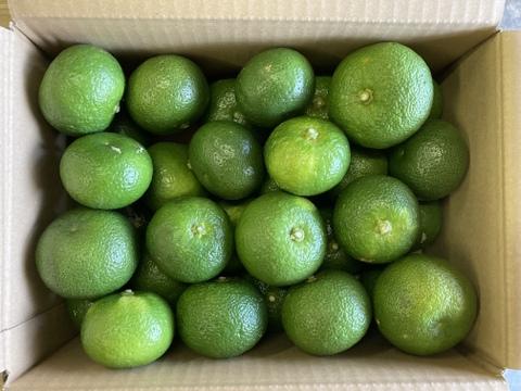 幻の柑橘【直七】なおしち 約3.5kg〜4kg
