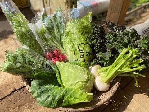 栄養価コンテスト6冠達成!旨み野菜セット【S】