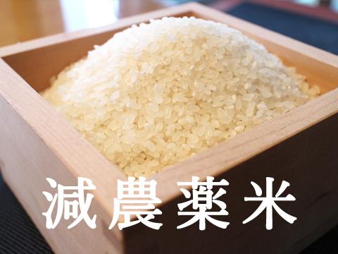 冷めても美味しい千葉コシヒカリ白米5kg玄米5kg