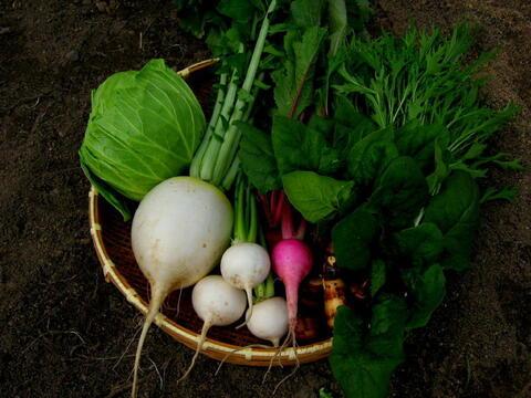 【無農薬 露地栽培】四季のとれたて野菜セット(約8種)