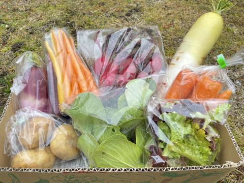 【無農薬!】びわ湖の水で育む有機野菜セット!【9~11品】