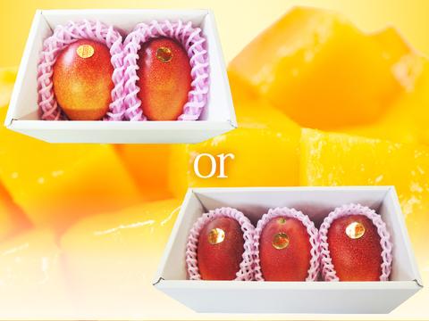 【食べチョク限定:家庭用】樹齢25年以上の木からなる糖度約17~18度の完熟マンゴー(2~3玉:0.9kg~1kg)
