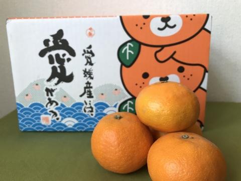 春のみかん【カラマンダリン】濃厚なたっぷり果汁!ご家庭用(3kg)