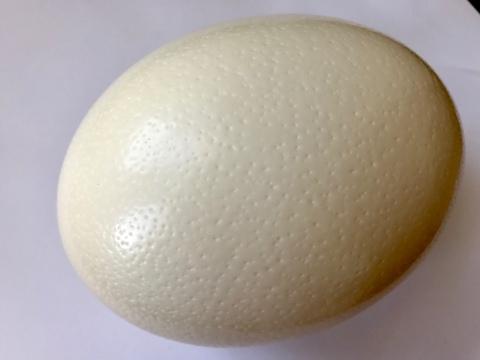 【自然のまま】ダチョウ母さんのたまご 1.2~1.5kg【鶏卵20〜30個分】