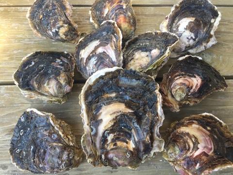 夏休み企画!みんなで牡蠣剥きパーティ☆Sサイズ9個500g越1個入り。限定1セット
