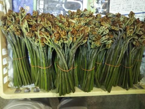 春のお勧めセット にし阿波世界農業遺産ブランド野菜 「わらび」「スナップエンドウ」