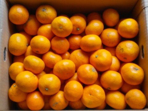 さわやかな香りのお蜜柑「はれひめ」5kg