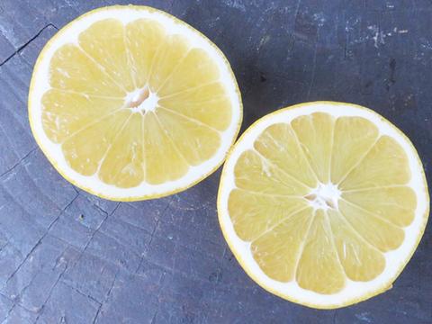 【光電子水利用】さっぱりとした酸味の河内晩柑3kg