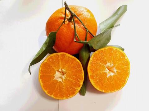 【有機JAS】高糖度の高級品種!甘平 ご家庭用(4kg)