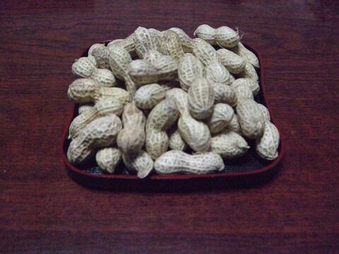 自然農法*甘い生落花生300g10月中旬頃から販売予定。予約受け付けております。