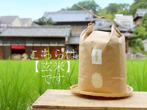 【金鵄米/玄米】冷めても美味しいヒノヒカリ きんしまい(5kg)