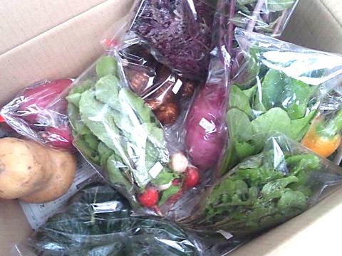 農業人坂尻ハジメの季節のお任せ野菜BOX(8種)