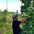 信州安曇野りんご園 浅野農園